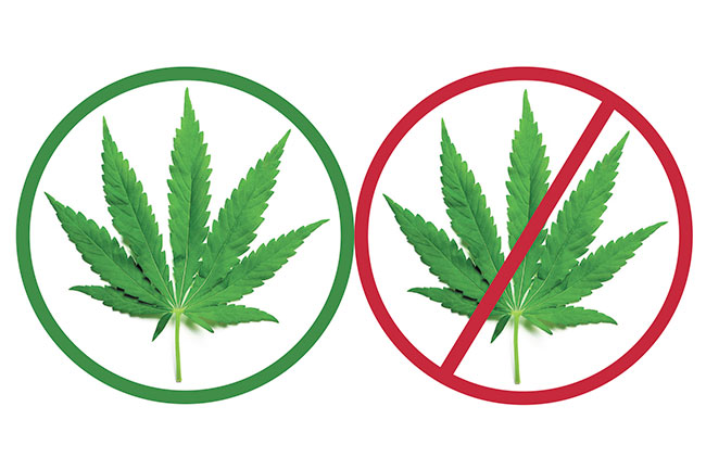 cannabis yes or no